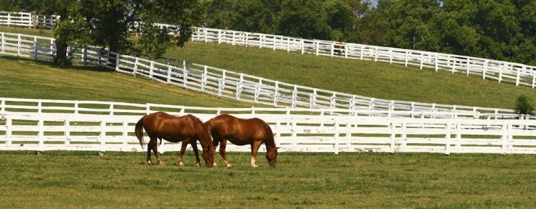 Horse Farm Homes